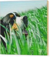 A Cute Dog In The Grass Wood Print