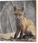 A Cute Kit Fox Portrait 1 Wood Print