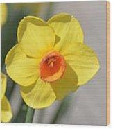 A Daffodil Hello Wood Print