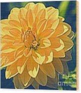 A Dahlia In Autumn Wood Print