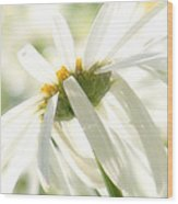 A Daisy A Day Wood Print