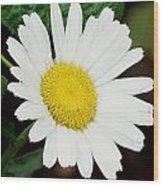 A Daisy If You-do Wood Print