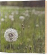 A Dandy Field Wood Print