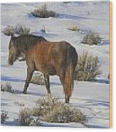 A Day In The Life Of  A Wild Horse  Wood Print by Jeanne  Bencich-Nations