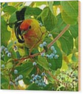 A Day With Mr. Tanager 3 Wood Print by Jacquelyn Roberts