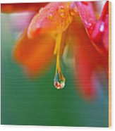 A Delicate Touch - Water Droplet - Orange Flower Wood Print