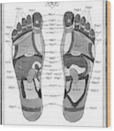 A Diagram Of Parts Of The Foot Wood Print