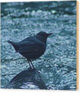 A Dipper On A Rock Wood Print