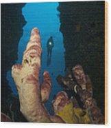 A Diver Looks Into A Cavern Wood Print by Steve Jones