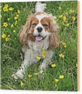 A Dog's Buttercup Heaven Wood Print by Jo Collins