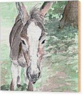 A Donkey Day Wood Print