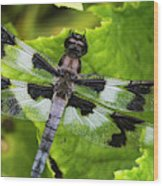 A Dragonfly Warms Up In A Vegetable Wood Print
