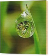 A Drop Of Water For Every Blade Of Grass Wood Print