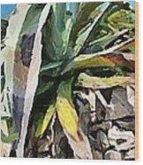 A Dry Agava Wood Print