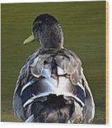 A Duck's Tale Wood Print