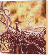 A Eaglet In Down Wood Print