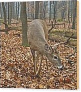 A Eight Point Buck 1261 Wood Print