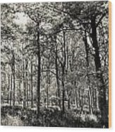 A English Forest Wood Print