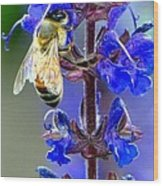A European Honey Bee And It's Flowers Wood Print