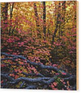 A Fall Forest  Wood Print
