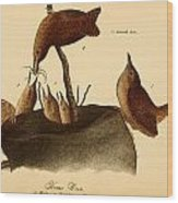 A Family Of House Wrens Wood Print