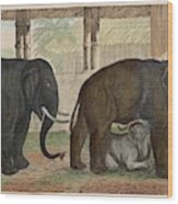 A Family Of Indian Elephants Wood Print