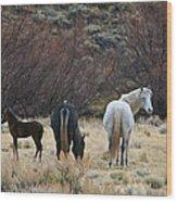 A Family Of Three - Wild Horses - Green Mountain - Wyoming Wood Print