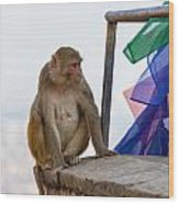 A Female Macaque On Top Of Wall Wood Print