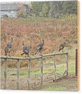 A Fence Line Of Fall Turkeys Wood Print