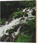A Fern On An Isalnd  On Wahkeena Creek Wood Print