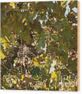 A Few Grapes Left For The Birds Wood Print