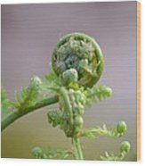 A Fiddlehead Abstract Wood Print