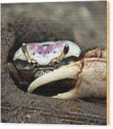 A Fiddler Crab Around Hilton Head Island Wood Print