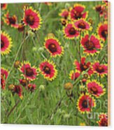 a field of Indian Blankets Wood Print
