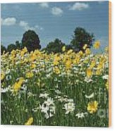 A Field Of Spring Wood Print