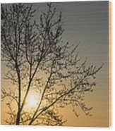 A Filigree Of Branches Framing The Sunrise Wood Print