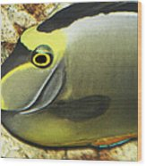 A Fish From The Ocean Wood Print
