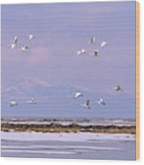 A Flock Of Swans Flies Over Water Wood Print
