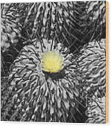 A Flower Among Thorns Wood Print