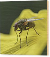 A Fly Wood Print