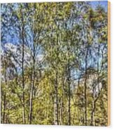 A Forest Glade Wood Print