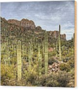 A Forest Of Saguaros  Wood Print