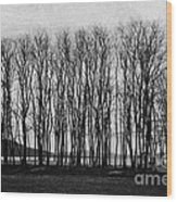 A Forest Of Trees Wood Print