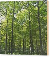A Forest Walk Wood Print
