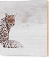 A Red Fox Fantasy Wood Print