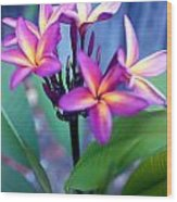 A  Frangipani Tree In Bloom Wood Print by Steven Valkenberg