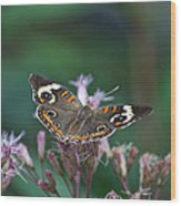A Friendly Butterfly Smile Wood Print