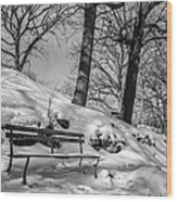 A Frigid Moment Wood Print