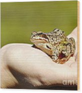 A Frog In The Hand Wood Print