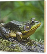A Frog Is Forever Wood Print